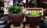 柴烧茶壶与盖碗分别适合泡什么茶,泡茶是用柴烧壶还是盖碗好?