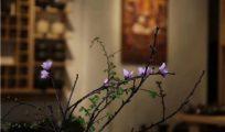 自然拙朴的柴烧茶具和历史悠远的茶道文化存在哪些关联?